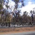 WA Government announces building reforms for new homes in bushfire areas